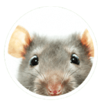 RODENT EXCLUSION AND PROOFING